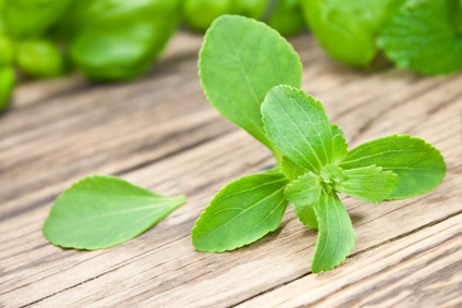 stevia_pflanze